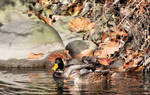 Two Ducks Autumn 3940