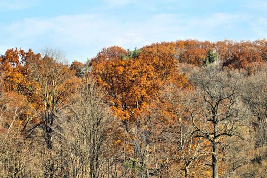 Autumn Orange 4011