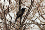 Bird In A Tree 7970 by wolvesandcharms