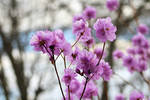 Spring 9302