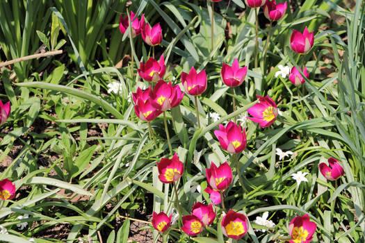 Spring 9990