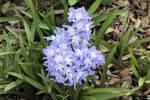 Spring 9908