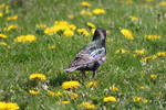 Bird 11774