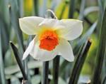 Spring 9969