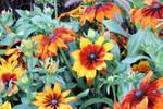 Orange And Yellow Flowers 22531