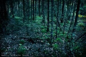Forest in Nova Scotia 01