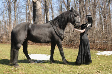 Girl And Horse Stock 07 by MeetMeAtTheLake2Nite