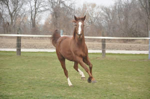 Dexter Horse Stock 01