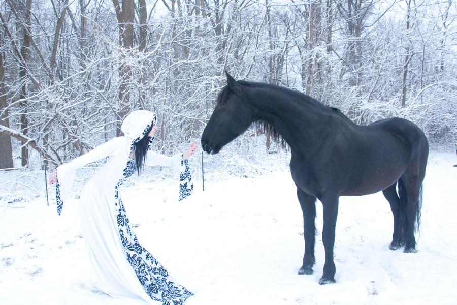 Equine Fantasy Stock 021 by MeetMeAtTheLake2Nite