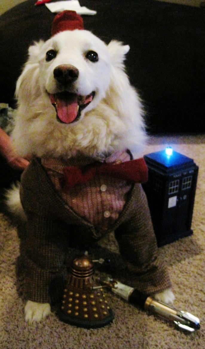 Doctor Who Eleven Costume for my dog Blitzen by Gothscifigirl
