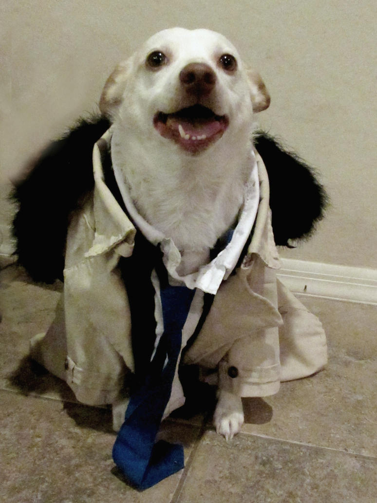 Castiel Supernatural Costume for my dog Rory by Gothscifigirl