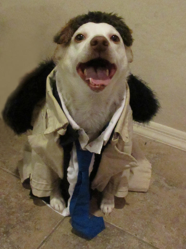Castiel Supernatural Costume for my dog Rory wHair by Gothscifigirl