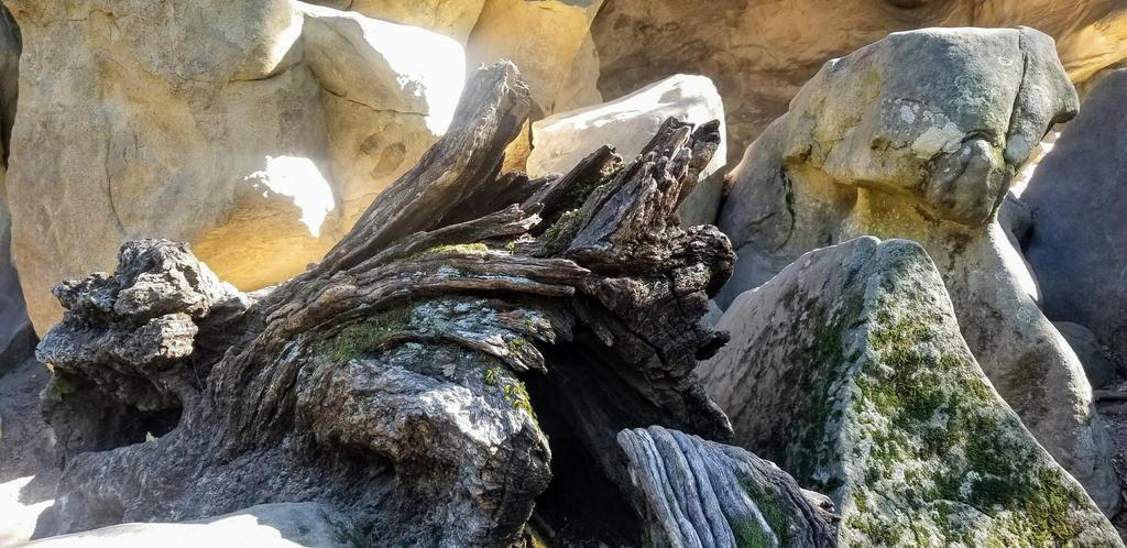 Mossy Tree Stump at Castle Rock