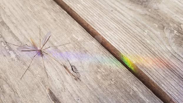 Chromatic Crane Fly