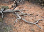 Navajo Monument 7 [gnarly roots]