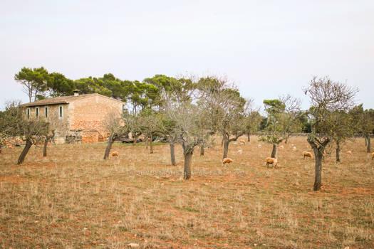 The Majorcan Sheep Farm