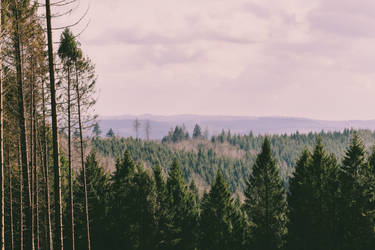 Balver Forest