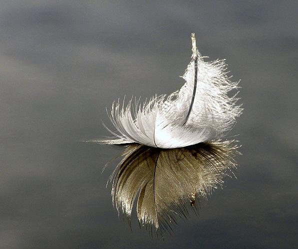 Floating feather by shadowlight-oak