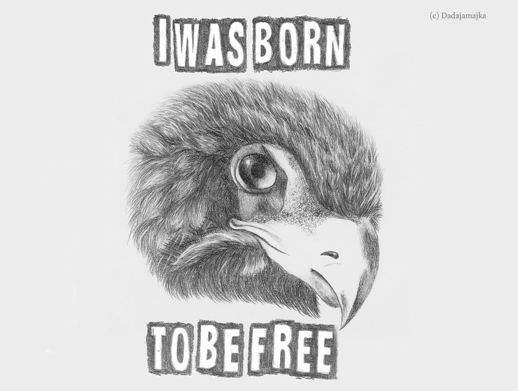 I was born to be free