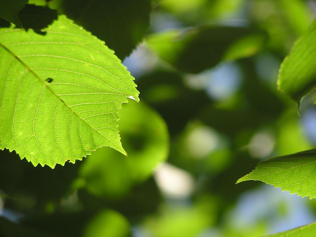Leaf dream by MyFlower06