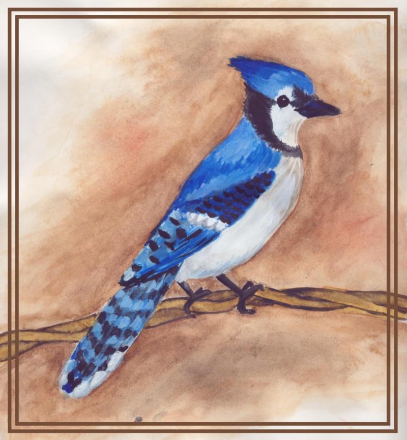 Blue Jay By Furbolly21 On DeviantArt
