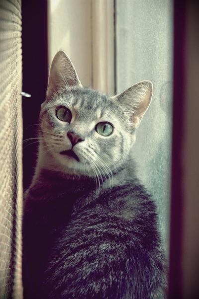 -- Catnoes -- by AshleyxBrooke