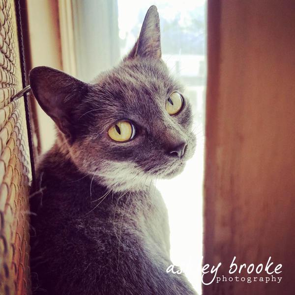 -- Little Bella -- by AshleyxBrooke