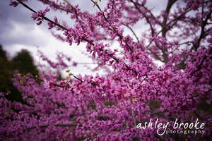-- Spring has Sprung-- by AshleyxBrooke