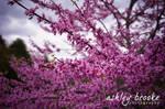 -- Spring has Sprung--