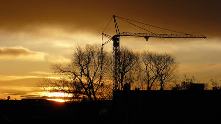 Crane in the morning