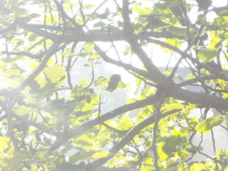 Morning Fig Leaves by AlianaHawk