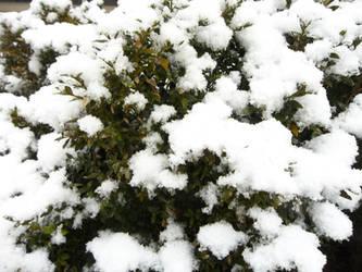 Snowy Bush by AlianaHawk