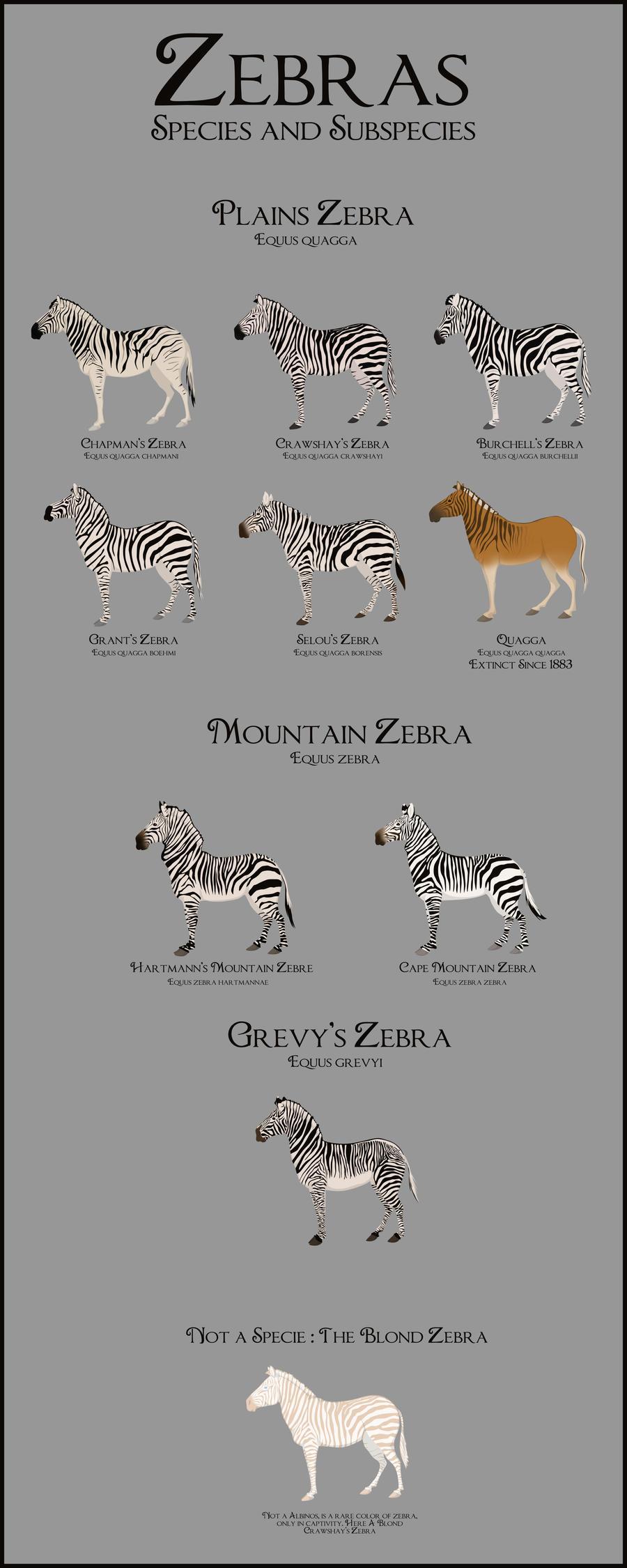 Qu'en pensez vous ? Zebras_by_citronvert79-d2yndvr