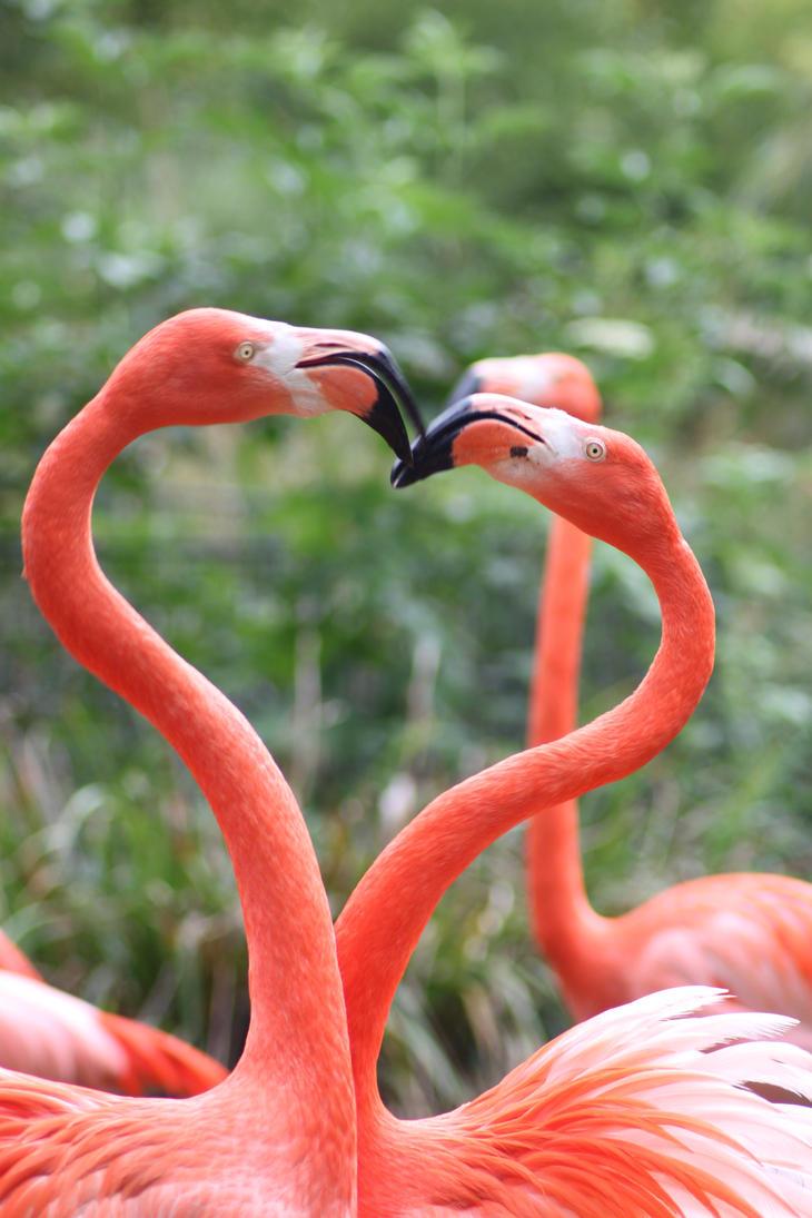 Flamingos by Citron--Vert
