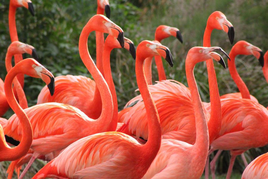 Flamingos III by Citron--Vert