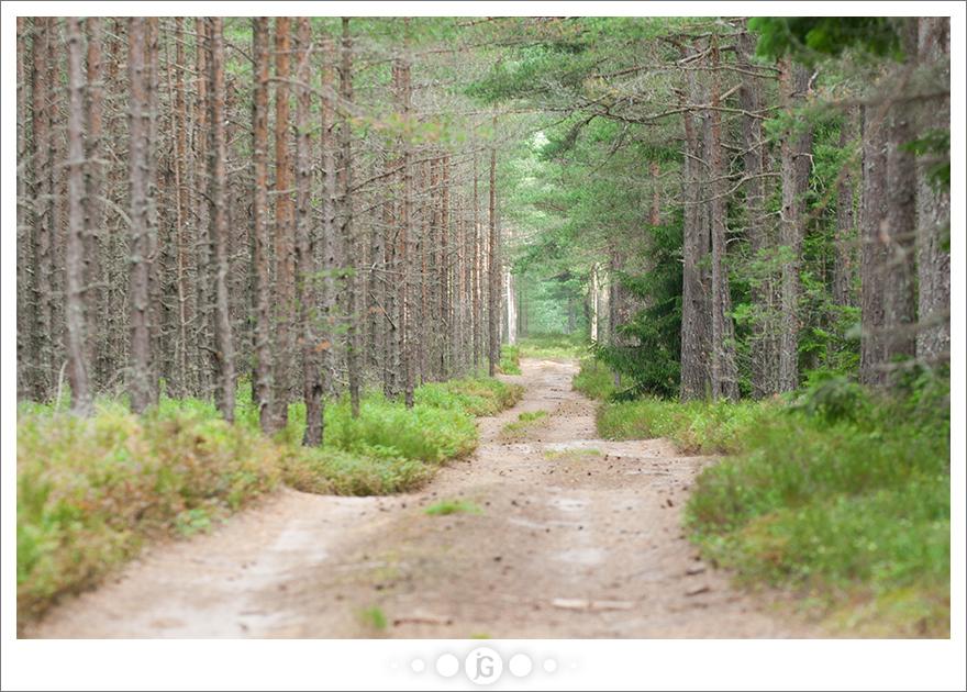 Road by janograf