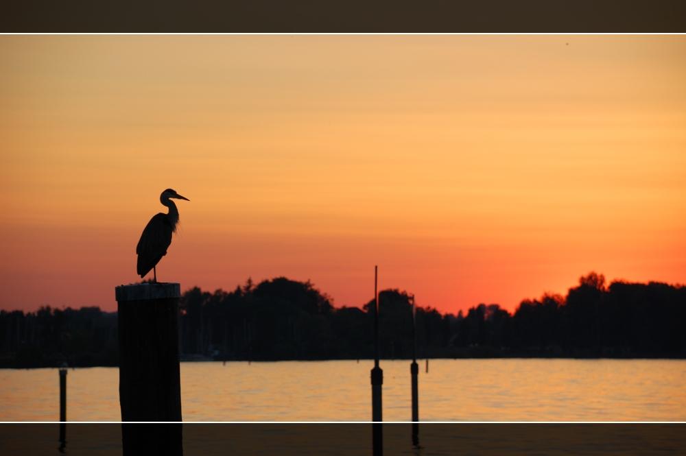 Crane at the lake by DomCyrus