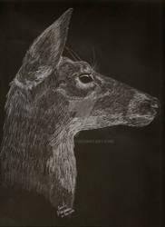 White Tailed Deer on Black