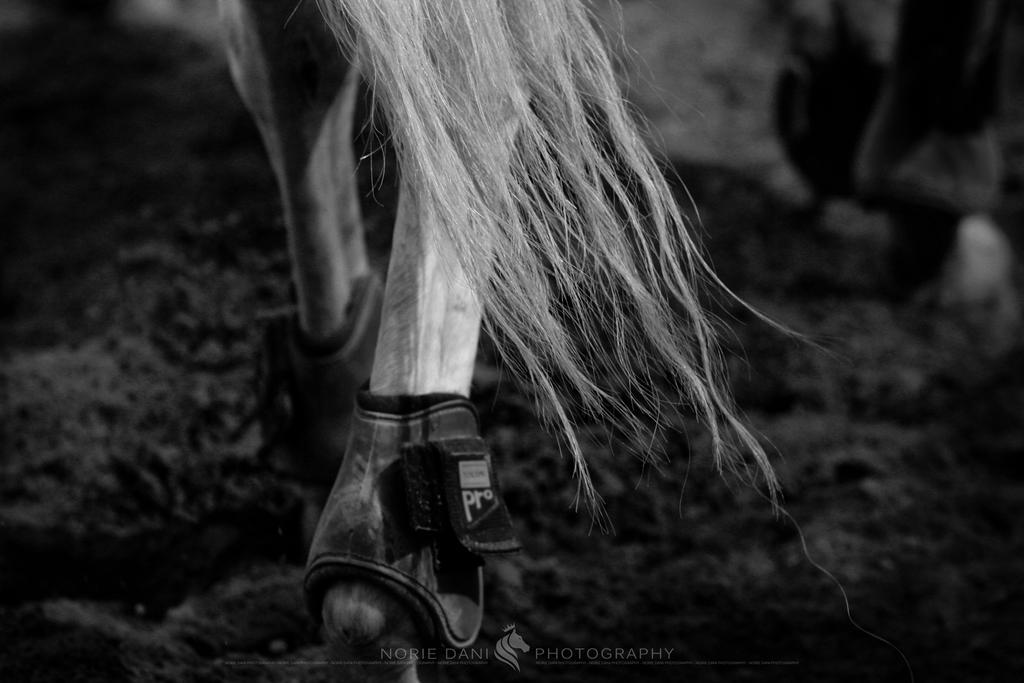 Horse Sense 7 by Norie-Dani