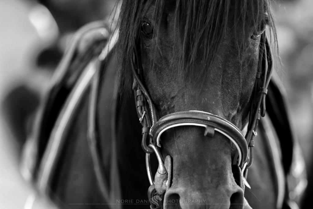 Horse Sense 6 by Norie-Dani