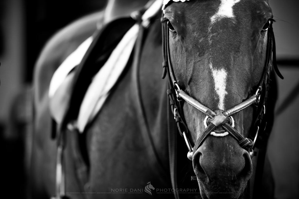 Horse Sense 1 by Norie-Dani