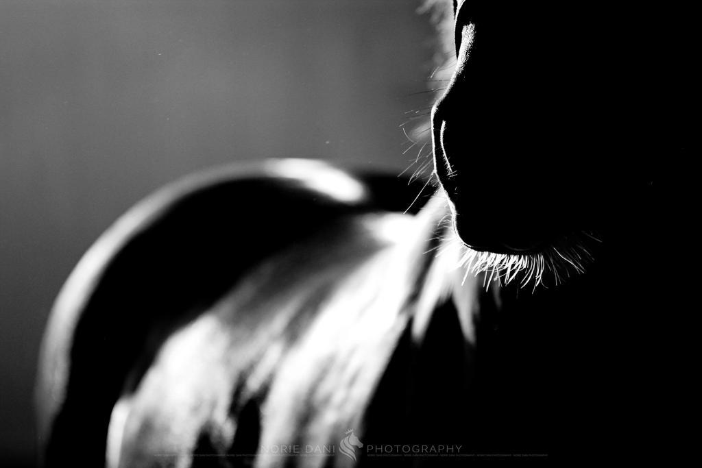 Horse Sense 2 by Norie-Dani