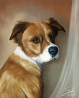 Dodger Portrait by CierinBlue