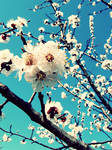 remember spring by cloud-room