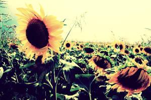 goodbye summer by cloud-room