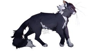 supermassiveblackhole-core cat
