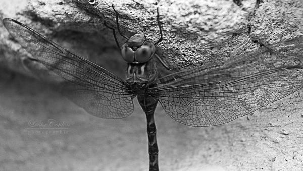 Vole tant que tu peux. by Berceuse-de-Pandore