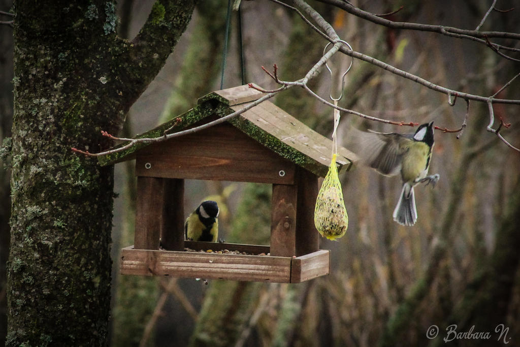Birds in winter by NoGuarantee