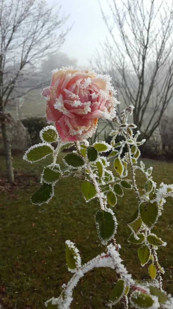Frozen by NoGuarantee