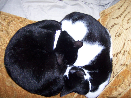 Yin Yang Cats by sadwonderland